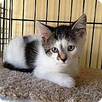 Adopt A Pet :: Felix, Oscar &  Max - Island Park, NY