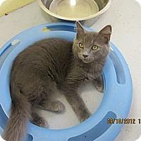Adopt A Pet :: Smokey - Bunnell, FL