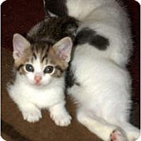 Adopt A Pet :: Ben - Xenia, OH