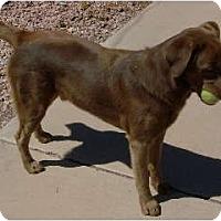 Adopt A Pet :: Dougie -Only $35 adoption fee! - Litchfield Park, AZ