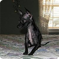 Adopt A Pet :: Selena - Villa Rica, GA