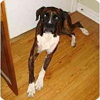 Adopt A Pet :: Izzie - Thomasville, GA
