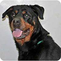 Adopt A Pet :: Laimi - Port Washington, NY