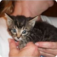 Adopt A Pet :: Jack - Acme, PA