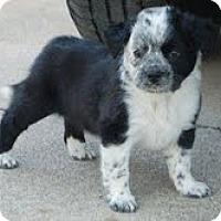 Adopt A Pet :: Ella - Staunton, VA