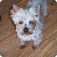 Adopt A Pet :: Ethel - Goodyear, AZ