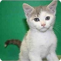Adopt A Pet :: MIKKI - SILVER SPRING, MD