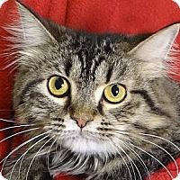 Adopt A Pet :: Itty Bitty Boo - Renfrew, PA