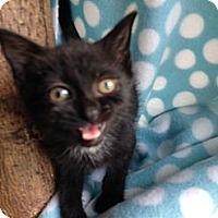 Adopt A Pet :: Gabby - Union, KY