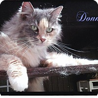 Domestic Longhair Cat for adoption in Calimesa, California - Donna