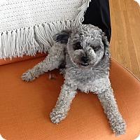 Adopt A Pet :: Newman - Chicago, IL