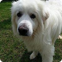 Adopt A Pet :: Oscar  *Pending Adoption - Tulsa, OK