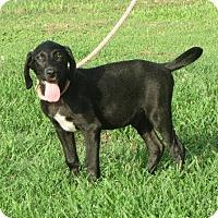 Adopt A Pet :: Grant - Westport, CT