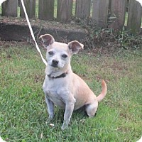 Adopt A Pet :: TACO - SWEETIE! - WOODSFIELD, OH