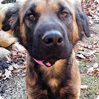 Adopt A Pet :: Chloe - Fennville, MI