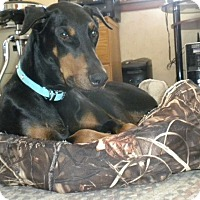 Adopt A Pet :: Diesel - Buffalo, MN
