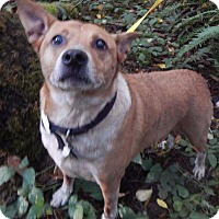 Adopt A Pet :: HOLLY - Needs family now. - Longview, WA