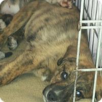Adopt A Pet :: Cooper and Copper - Richmond, MI