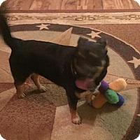 Adopt A Pet :: Flo - Wheatland, WY