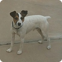 Adopt A Pet :: VINO - SEEKING FOSTER TO ADOPT - Hurricane, UT