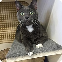 Adopt A Pet :: Henrietta - Seal Beach, CA