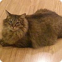 Adopt A Pet :: Abendigo - Novato, CA