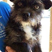 Adopt A Pet :: Missy - Tijeras, NM