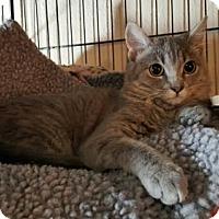 Adopt A Pet :: Simone - Denver, CO
