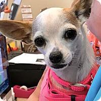 Adopt A Pet :: Precious - West Palm Beach, FL