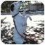 Photo 3 - American Bulldog/Pointer Mix Dog for adoption in La Honda, California - Jack