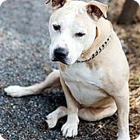 Adopt A Pet :: Quinton - Tinton Falls, NJ