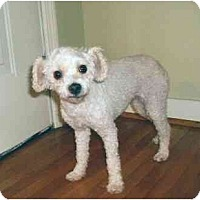 Adopt A Pet :: CiCi - Mooy, AL