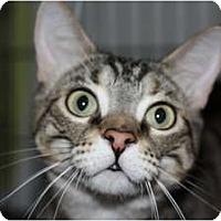 Adopt A Pet :: LuLu - Markham, ON