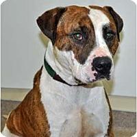Adopt A Pet :: Rolex - Port Washington, NY