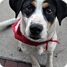 Adopt A Pet :: Toya
