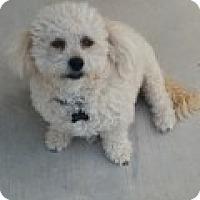 Adopt A Pet :: Bruce - Las Vegas, NV