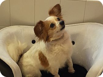 Nationwide md papillon meet jasmine in new york a for Papillon new york