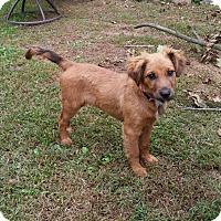 Adopt A Pet :: Gracie - Flemington, NJ