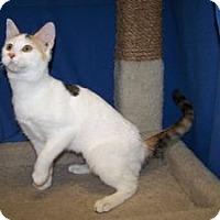 Adopt A Pet :: K-Ts2-Taffy - Colorado Springs, CO