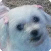 Adopt A Pet :: Sophie - MINNEAPOLIS, KS