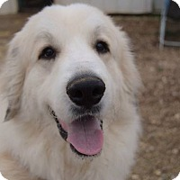Adopt A Pet :: Jessie - Bedminster, NJ