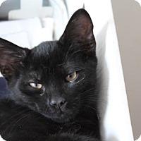 Adopt A Pet :: Pookie - Marietta, GA