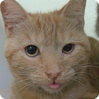Adopt A Pet :: Rufus - Redwood City, CA