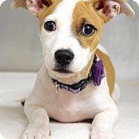 Adopt A Pet :: Gypsy - Dublin, CA