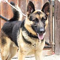 German Shepherd Dog Mix Dog for adoption in San Marcos, California - Dunbar