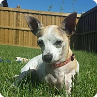 Adopt A Pet :: Sammie - Edmonton, AB