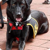 Adopt A Pet :: Nate - Washington, DC