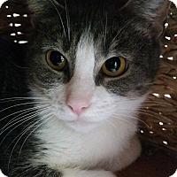 Adopt A Pet :: Mona - Chula Vista, CA