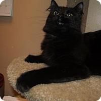 Adopt A Pet :: Raven - Capshaw, AL