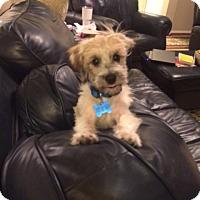 Adopt A Pet :: Knick - Houston, TX